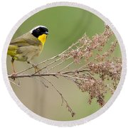 Yellowthroat Warbler Round Beach Towel