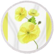 Beauty And Translucency Of Poppies. Round Beach Towel