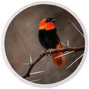 Yikes Spikes - Red Bishop Weaver Bird Round Beach Towel