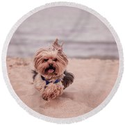 York Dog Playing On The Beach. Round Beach Towel