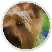 Yorkie In The Grass - Painting Round Beach Towel