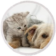 Yorkshire Terrier And Tabby Kitten Round Beach Towel