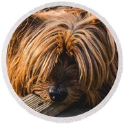 Yorkshire Terrier Biting Wood Round Beach Towel