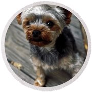 Yorkshire Terrier Puppy Round Beach Towel