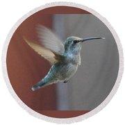 Young Anna's Hummingbird In Flight Round Beach Towel