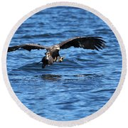 Young Bald Eagle I Round Beach Towel
