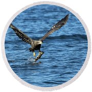 Young Bald Eagle II Round Beach Towel