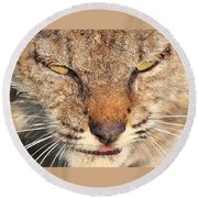 Young Bobcat Portrait 01 Round Beach Towel