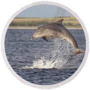Young Bottlenose Dolphin - Scotland #13 Round Beach Towel