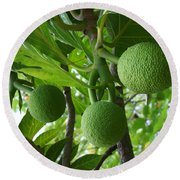 Young Breadfruit Round Beach Towel