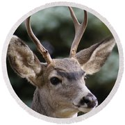 Young Buck Round Beach Towel