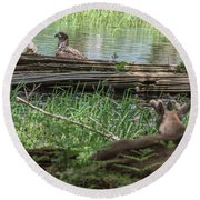 Young Buck Watching Eagle Round Beach Towel