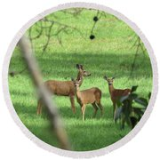 Young Buck With Two Does In The Meadow Round Beach Towel