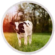Young Calf Round Beach Towel