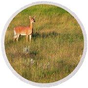 Young Deer Round Beach Towel