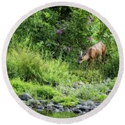 Young Doe Among The Flora, No. 2 Round Beach Towel