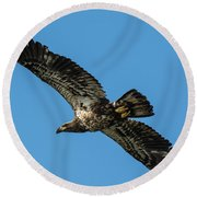 Young Eagle Color Round Beach Towel