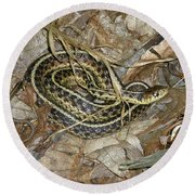 Young Eastern Garter Snake - Thamnophis Sirtalis Round Beach Towel