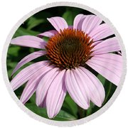 Young Echinacea Bloom Round Beach Towel