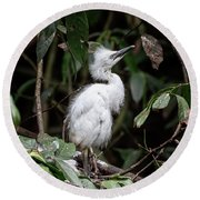 Young Egret Costa Rica Round Beach Towel