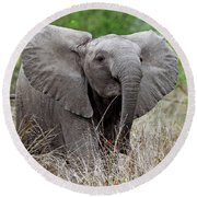 Young Elephant In The Light, Africa Wildlife Round Beach Towel