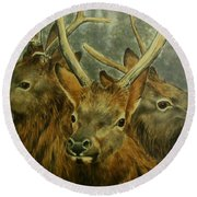 Young Elk Trio- Wapiti Round Beach Towel