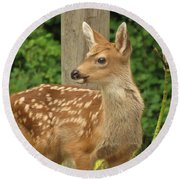 Young Fawn Round Beach Towel