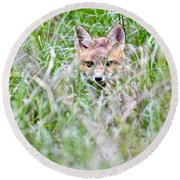 Young Fox Kit Hiding In Tall Grass Round Beach Towel