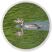 Young Grebe Round Beach Towel