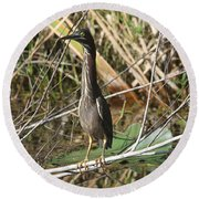 Young Green Heron  Round Beach Towel