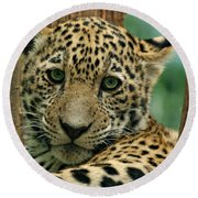 Young Jaguar Round Beach Towel