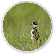Young Killdeer In Grass Round Beach Towel
