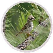 Young Lark Sparrow 2 Round Beach Towel