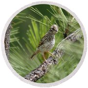 Young Lark Sparrow 3 Round Beach Towel