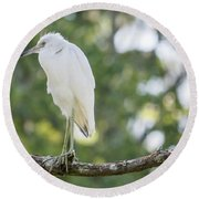 Young Little Blue Heron Round Beach Towel