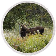 Young Male Moose Round Beach Towel