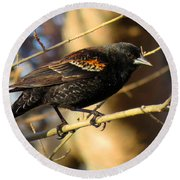 Young Male Red-winged Black Bird Round Beach Towel