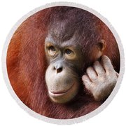 Young Orang Utan Looking Thoughtful Round Beach Towel