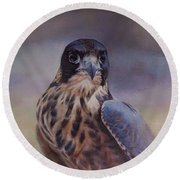 Young Peregrine Falcon Round Beach Towel