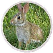 Young Rabbit Round Beach Towel
