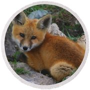 Young Red Fox Round Beach Towel