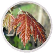 Young Red Maple Leaf In May Round Beach Towel