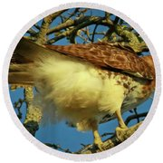 Young Red-tail Round Beach Towel