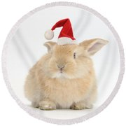 Young Sandy Rabbit Wearing A Christmas Round Beach Towel