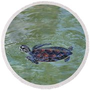 Young Sea Turtle Round Beach Towel