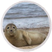 Young Seal Pup On Beach - Horsey, Norfolk, Uk Round Beach Towel