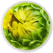 Young Sunflower Round Beach Towel