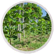 Young Teak Plantation Round Beach Towel