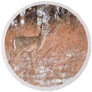 Young White-tailed Deer In The Snow Round Beach Towel