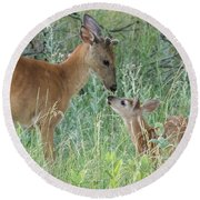 Young White-tailed Deer Say Hello Round Beach Towel